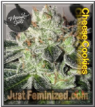 Mamiko Cheese Cookies Feminised 6 Pot Seeds